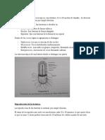 Bacterias Informe