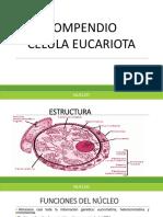Compendio célula eucariota GFS (1)