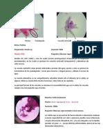 docsity-laboratorio-biologia-celular.docx