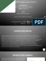 presentacion acido nucleicos