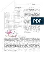 Crucigrama Sistema Nervioso.pdf