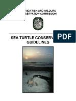 Sea Turtle FL 07