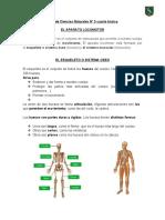 GUÍA CIENCIAS NATURALES 3, 4 Y 5 SISTEMA LOCOMOTOR