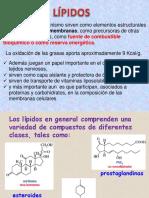 Lipidos__1