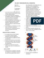1- ESTRUCTURA DEL ADN Y ORGANIZACIÓN DE LA CROMATINA.pdf