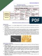 TREPONEMA PALLIDUM (Sífilis)