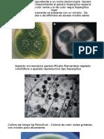 imagenes micologia