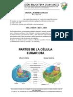 ACTIVIDAD CIENCIAS NATURALES GRADO 6