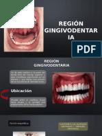 EL DIENTE (REGION GINGIVODENTARIA)