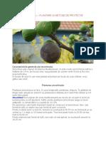 SMOCHINUL_PLANTARE_I_METODE_DE_PROTEC_IE.docx;filename*= UTF-8''SMOCHINUL – PLANTARE ȘI METODE DE PROTECȚIE.docx