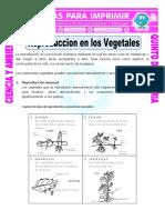 Ficha-Reproduccion-en-los-Vegetales-para-Quinto-de-Primaria.doc