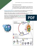 Subiecte-parazitologie.pdf