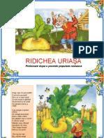 Ridichea_uriasa