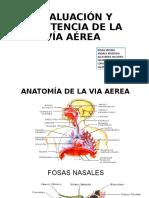 VIA AEREA ANESTESIOLGOIA-1
