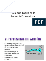 Fisiología básica de la transmisión nerviosa