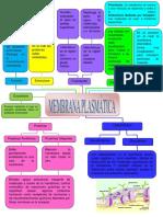 MAPA-CONCEPTUAL-DEL-TEMA-MEMBRANA-PLASMATICA (1).pdf