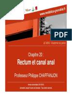 anatomie rectum