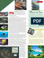 American Samoa Reef Snorkle Adventure