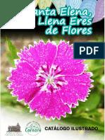 SANTA ELENA, LLENA ERES DE FLORES