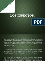 MORFOLOGÍA-DE-INSECTOS-PARCIALII1