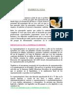 embriologia-falta-caratula.docx