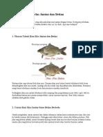 Perbedaan Ikan Mas Jantan dan Betina