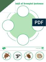 ciclul-de-viata-al-broastei-testoase---fisa-de-lucru_ver_1.pdf