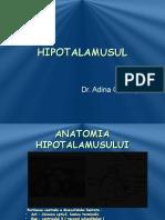 C2-HIPOTALAMUS