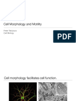 cell_morphology_motility.pdf