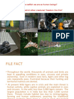 TIGER IN THE ZOO.ppt