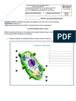 GUIA 1 CELULA 6°.pdf