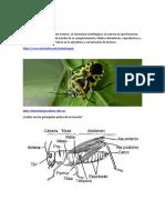 Clasificación y habitos alimenticios de los insectos