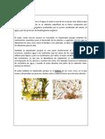 MATERIAL DE APOLLO MEDIO AMBIENTE