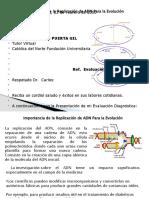 SEMAN 1 Importancia de la Replicacion del ADN