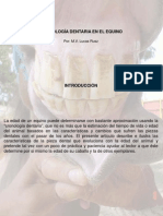 Conologia Dentaria Del Equino