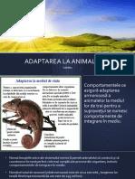 ADAPTAREA LA ANIMALE.pptx