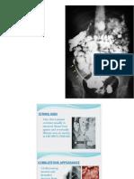 review cases.pdf