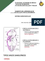 15 cardiovascular_aula virtual MODIF (1).pdf