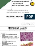 03.1 Membrana y Núcleo