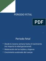 12.- PERIODO FETAL