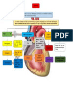 mapa cardioplejia