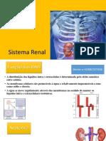 Sistema renal