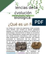 Actividad de evidencias de evolución biológica