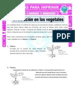 Ficha-Circulación-en-los-vegetales-para-Quinto-de-Primaria