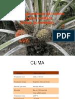 Manejo cultivo Palma Capacitación 3