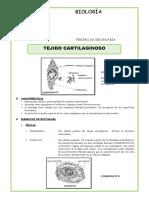 El-Tejido-Cartilaginoso-para-Tercero-de-Secundaria