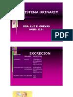 sistema_urinario.docx