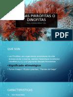 Algas pirrófitas o dinofitas