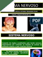 05 Sistema Nervoso