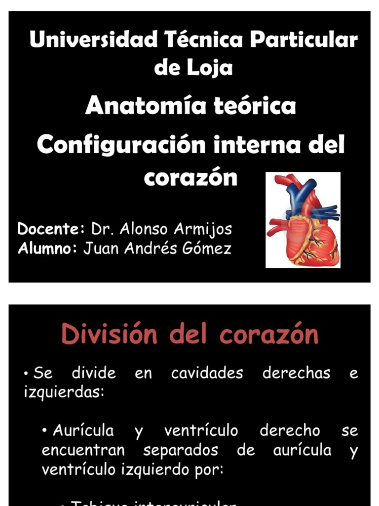 Anatomia presentacion corazon!